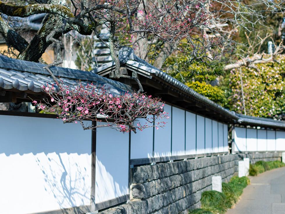 妙蓮寺の白壁通り